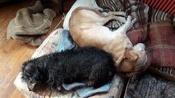 MERE NOEL et museaux de chien