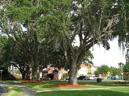 Floride--8-.jpg