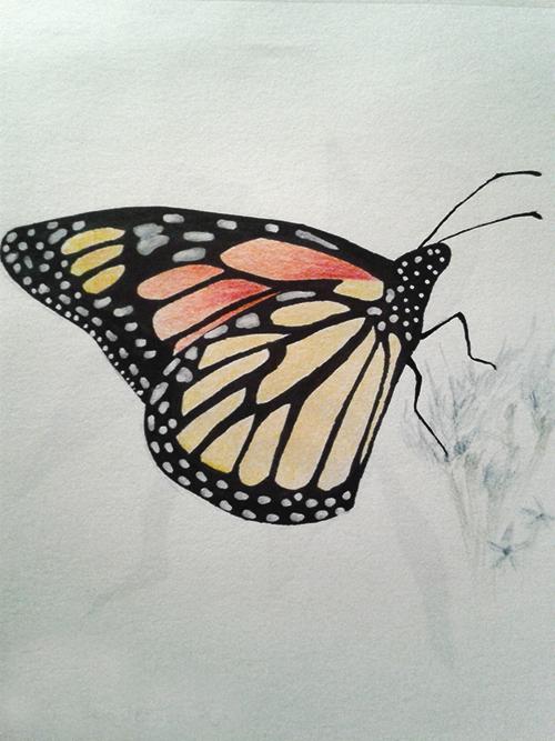 #4 Challenge : Insecte