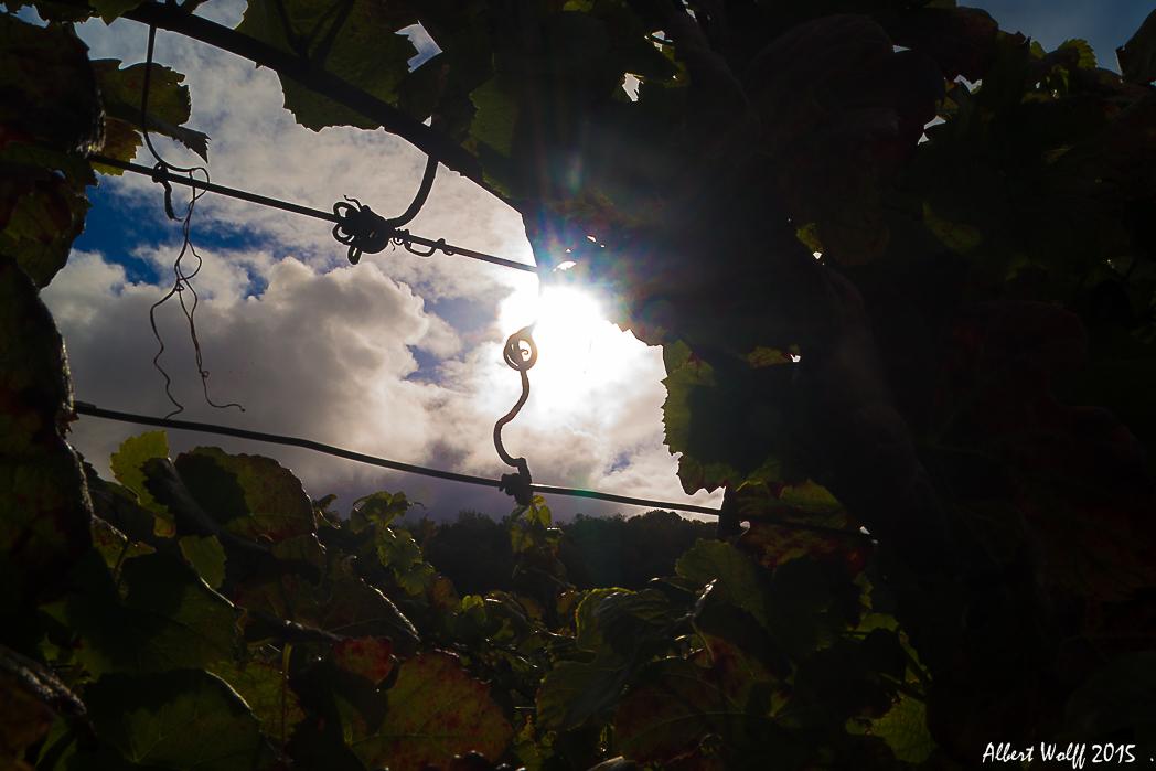 Par delà les vignes.