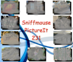 Picture It 231 - Sniffmouse