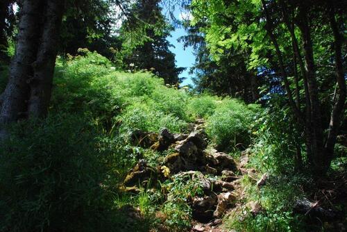 Le sentier rocailleux