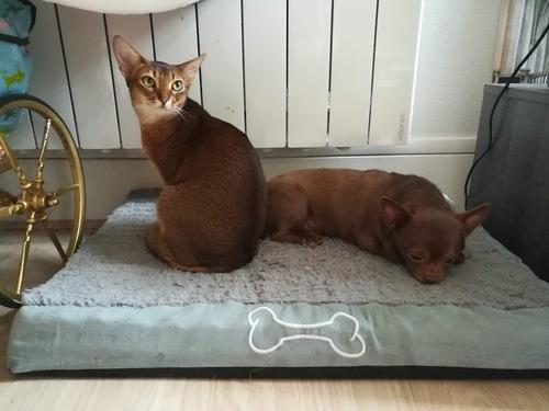 Un an d'adoption