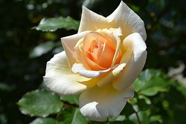 Jardin des fleurs 491