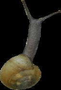 Tubes Escargots