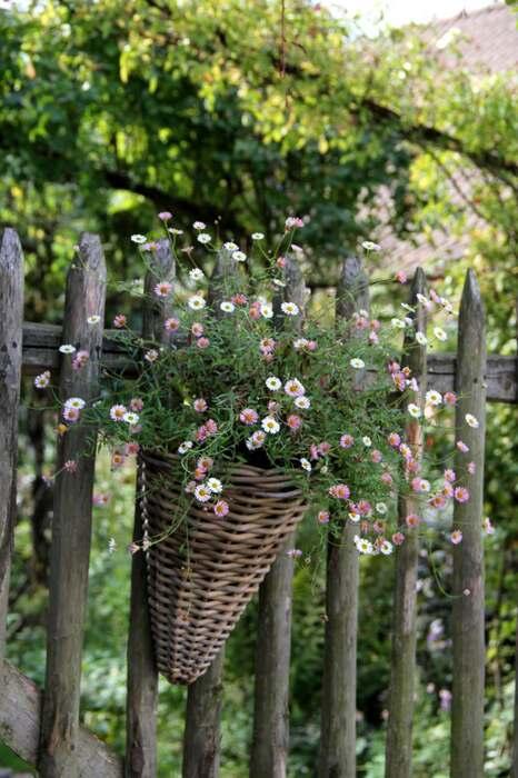 Hanging baskets : le bilan (6/8)