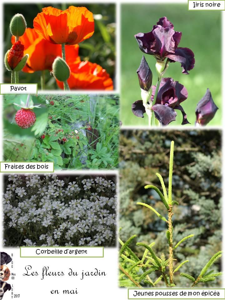L'émerveillement de mon jardin et une fleur en particulier