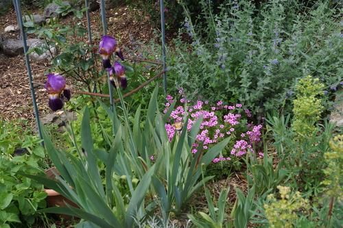 Petite balade dans le jardin