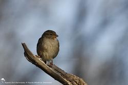 Diversité d'oiseaux 11 - 2014