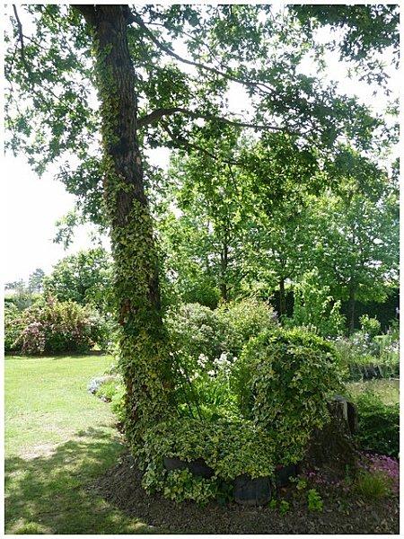 lierrez-autour-de-l-arbre.jpg