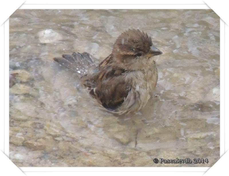 """Les oiseaux de """"mon"""" chemin - 3/9"""