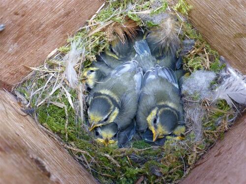 Bébés ,mésange pinson,merles et autres oiseaux !!