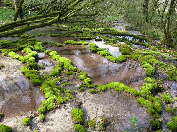 La flore des marais tufeux du plateau de Langres, une conférence de Marie-Geneviève Poillotte pour la Société Mycologique du Châtillonnais