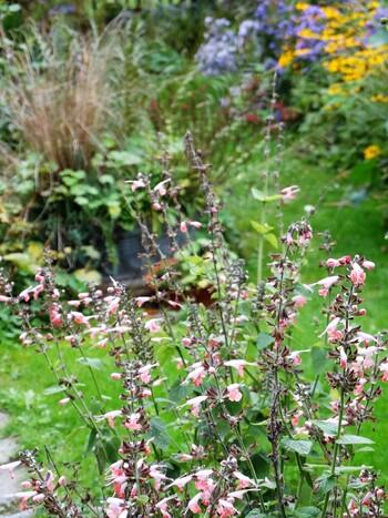 Octobre au jardin