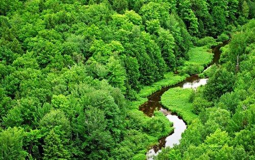 Paysages forêt (1)