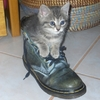 chaussures-chatons-autres-animaux-france-9923364521-927965.jpg