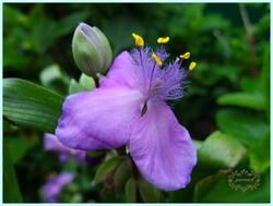histoires de fleurs (3)