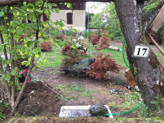 L'image contient peut-être: plante, arbre et plein air