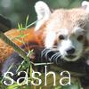 Sasha-