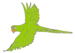perroquet-vert-vole.jpg