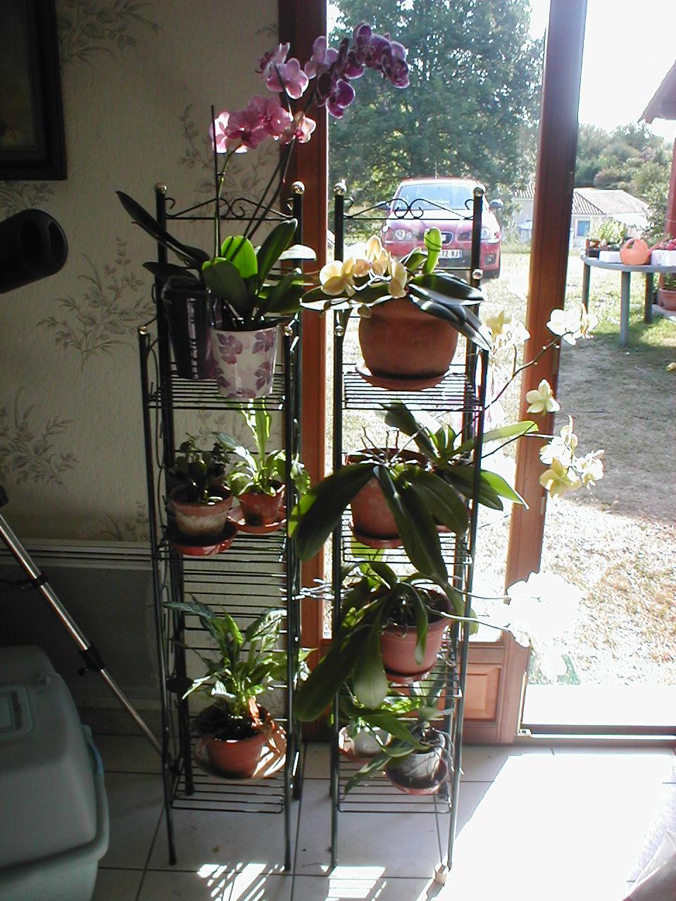 orchid es ann e 2010 symphonie24. Black Bedroom Furniture Sets. Home Design Ideas