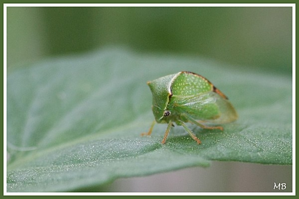 Insectes 0779