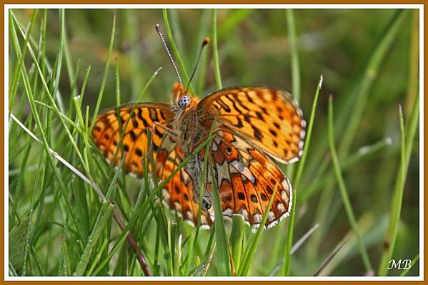 Insectes-02-8486a.jpg