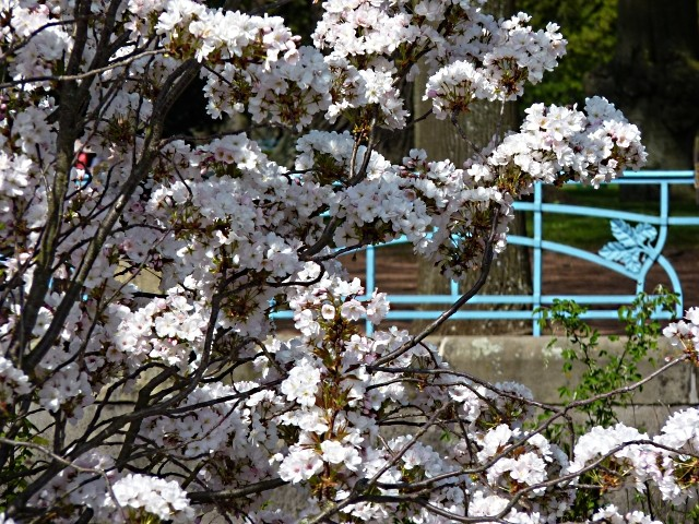 Metz fleurs d'été 4 mp1357 2011