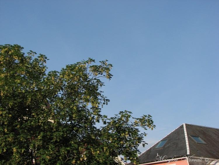 Ciel d'Alsace 367