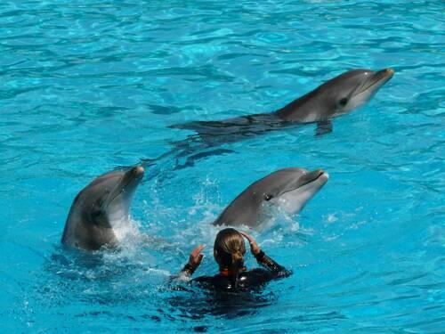Dauphins et leur soigneur