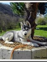 Jalya (4 mois)