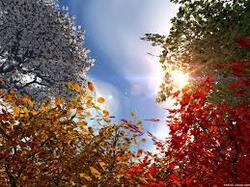 L'automne...!!!
