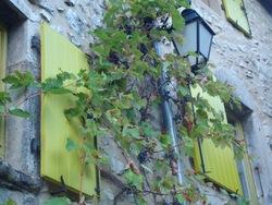 --- Cobonne --- volets captant l'attention du visiteur par leur surprenante et lumineuse couleur - 2 octobre 2016 ----