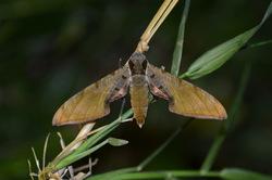 Inventaire des lépidoptères Martinique 2017