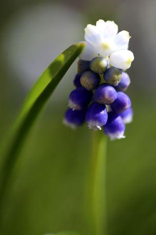 Le jardin comme exutoire (4)