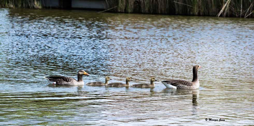 Au fil de l'eau en famille