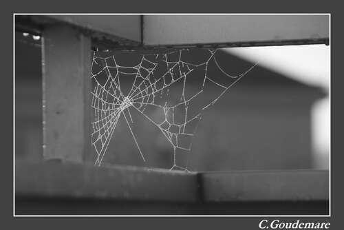 Toile d'araignées # 3
