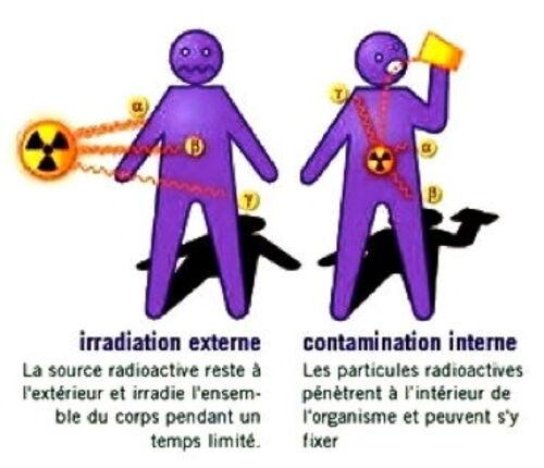 Le nucléaire : effets biologiques des rayonnements ionisants. (1)