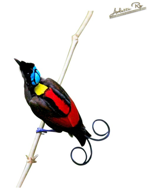 Tubs oiseaux