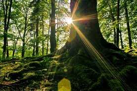 Dans la forêt des songes