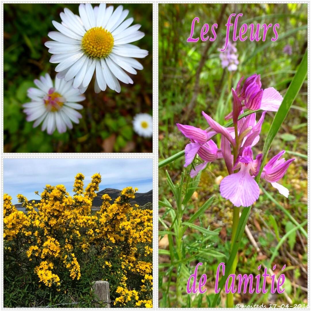 ©maiteds  Les fleurs de l'amitié
