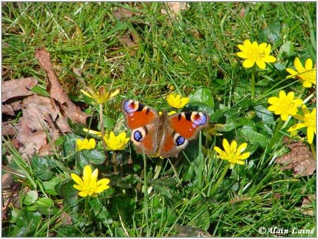 Papillon_Mars08_2