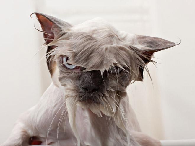 Les Petits Félins 2:  16 photos de chats pas contents du tout