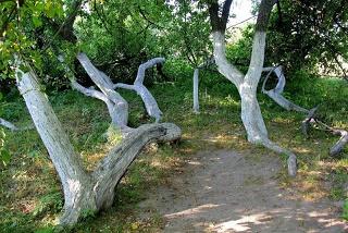 Quand la nature improvise ...