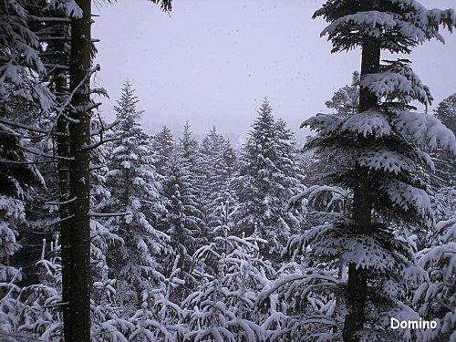 foret-neige.jpg