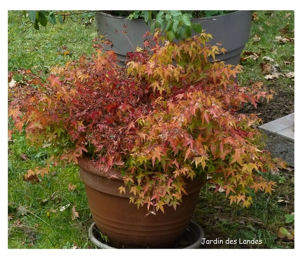 Les couleurs d'automne au jardin.