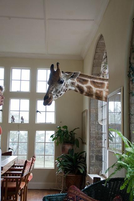 Giraffe Manor, in Nairobi