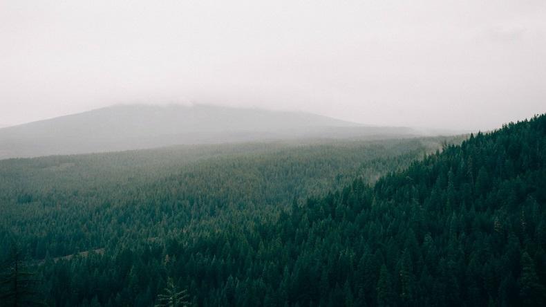 Vert [défi du lundi] foret sapins