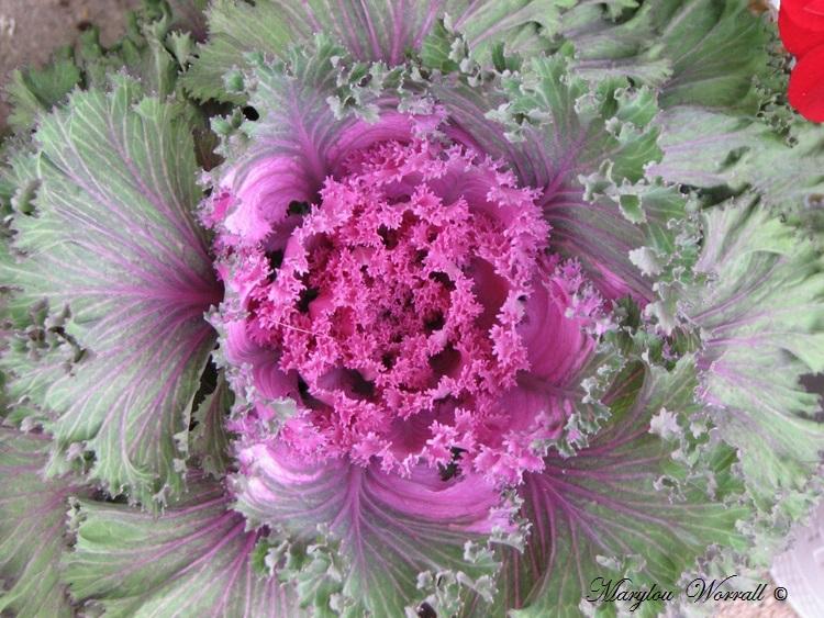 Ingersheim : Nouvelles plantes etc…