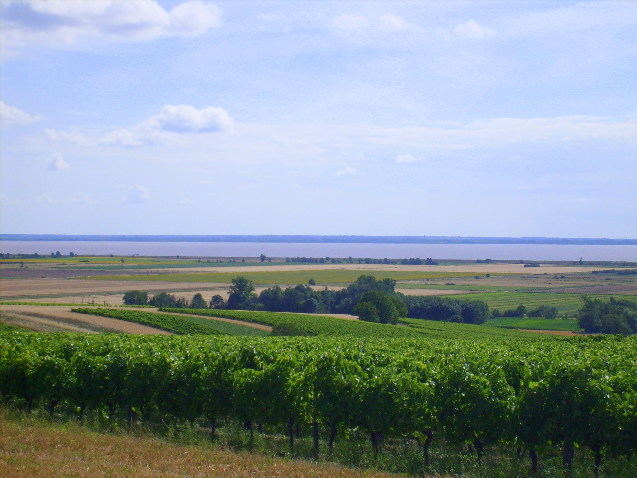 """Résultat de recherche d'images pour """"Saint-Bonnet-sur-Gironde"""""""